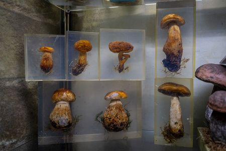 Ontdek-the-wild-mushroom